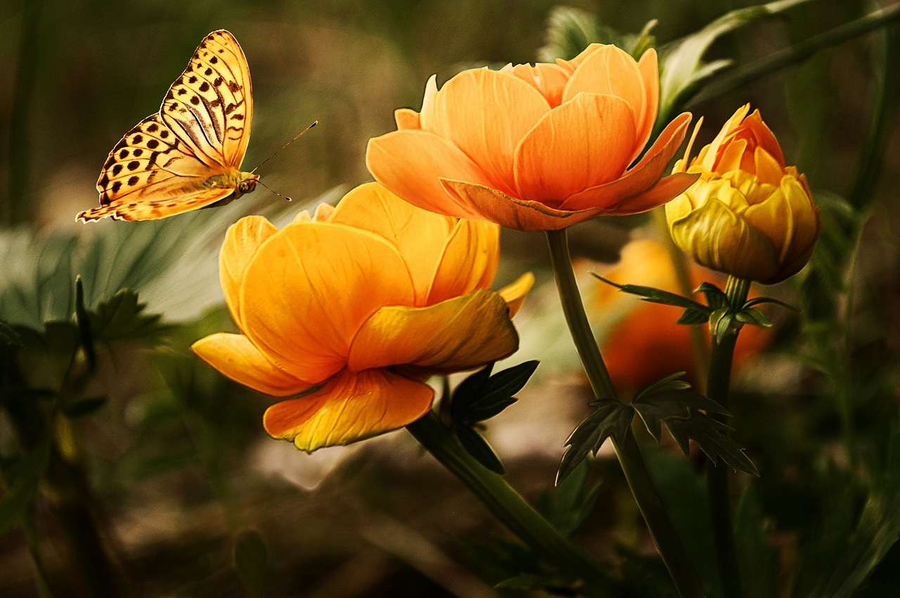 Image - flowers background butterflies