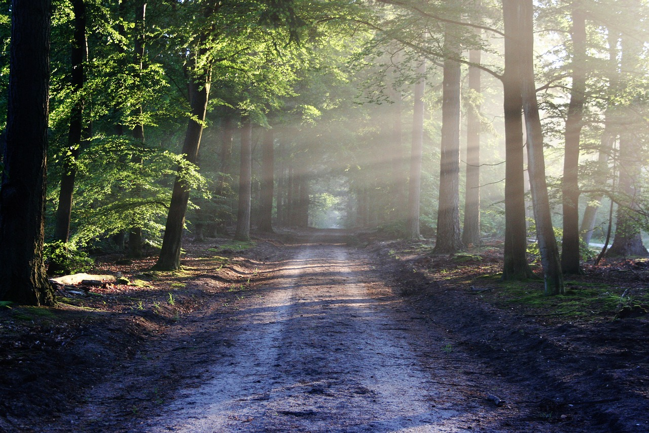 Image - road sun rays path forest nature